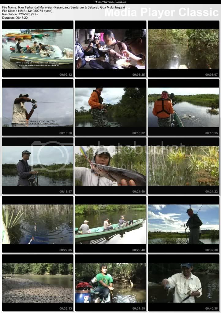ITM kerandang screen - Ikan Terhandal Malaysia: Kerandang Sentarum &amp; Sebarau Gua Mulu